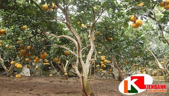 Đất trồng cây cũng thuộc diện hạn chế nhận tài sản